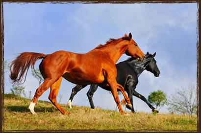 Horse Feed - Complete Race Formula